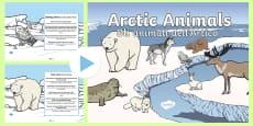 Winter Arctic Animals Habitat PowerPoint English/Italian