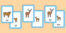 Animals and Their Young Matching Cards Arabic Translation