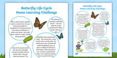 EYFS Butterfly Life Cycle Home Learning Challenge Sheet Reception FS2