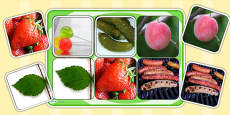 Photo Matching Cards and Board to Support Teaching on The Very Hungry Caterpillar