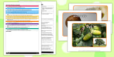 Seed Pictures EYFS Adult Input Plan and Resource Pack
