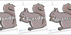 Days of the Week on Grey Squirrels