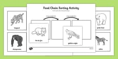 Food Chain Sorting Activity