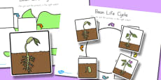 Australia - Bean Lifecycle Worksheets