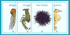 New Zealand Under the Sea Display Posters