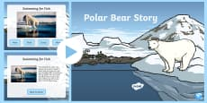 Polar Bear Drama Story and Photos PowerPoint