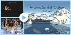 Presentation: Los animals del ártico