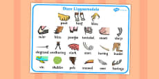 Afrikaans Animal Body Parts Word Mat