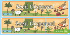 Seed Dispersal Display Banner