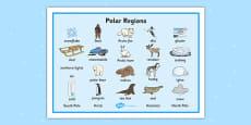 Polar Regions Word Mat