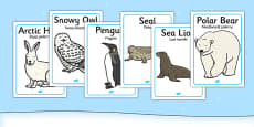 Polar Regions Animals Display Posters Polish Translation