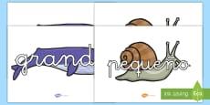 Pósters DIN A4: Vocabulario en ballenas y caracoles - Tamaño