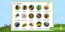 Tapiz de vocabulario: Los bichos en fotos