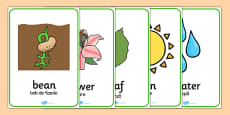 Plant and Growth Word Posters Romanian Translation