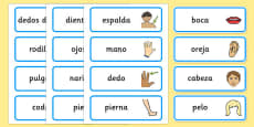 Spanish Parts of the Body Word Cards