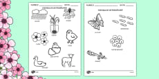 Spring Words Colouring Sheets Romanian
