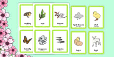 Spring Pairs Matching Game Arabic Translation