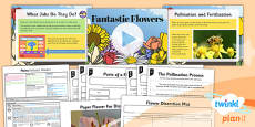 PlanIt - Science Year 3 - Plants Lesson 5: Fantastic Flowers Lesson Pack
