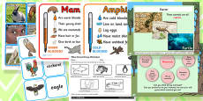 Identifying and Naming Animals Differentiated Lesson Teaching Pack