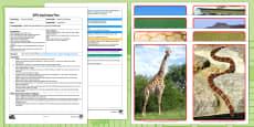 EYFS Walk Like an Elephant Adult Input Plan and Resource Pack
