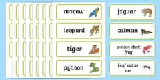 Rainforest Explorer Role Play Word Cards