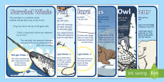 Arctic Animal Display Facts Posters