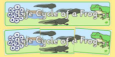 Life Cycle of a Frog Display Banner