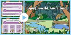 Pwerbwynt Cynefinoedd Anifeiliaid