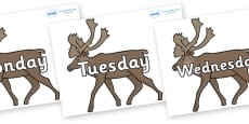 Days of the Week on Caribous