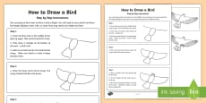 KS2 How to Draw a Bird Step-by-Step Instructions