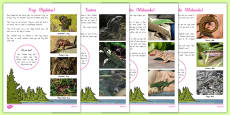 New Zealand Native Reptiles and Frogs Fact File
