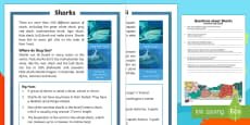 Sharks Differentiated Reading Comprehension Activity English/Italian