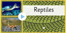 Australian Reptiles PowerPoint
