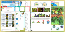 Childminder Butterfly Life Cycle EYFS Resource Pack