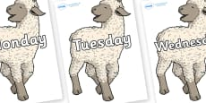 Days of the Week on Lamb