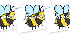 Months of the Year on Bees