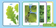 * NEW * Trees of Ireland Display Posters