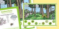 Woodland Plants Can you Find...? Poster and Prompt Card Pack