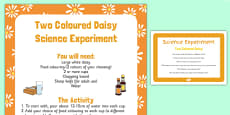 Two Coloured Daisy Science Experiment