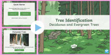 Deciduous and Evergreen Trees Task Setter PowerPoint