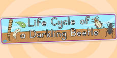 Australia - Darkling Beetle Life Cycle Display Banner