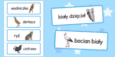 Polish Animals Word Cards