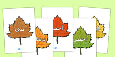 Colour Words on Autumn Leaves Arabic