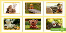 Teddy Bear Display Photos