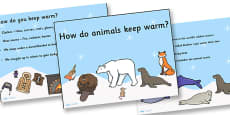 How Do Animals Keep Warm PowerPoint
