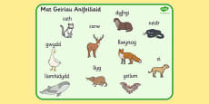 Welsh Animals Word Mat