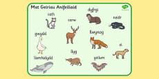 Welsh Animals Word Mat