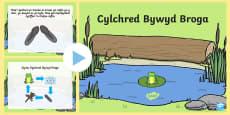 Pŵerbwynt Cylchred Bywyd Broga