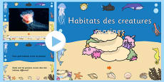 Under the Sea Habitats Video PowerPoint French