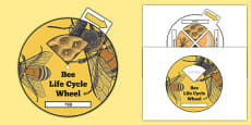 Bee Life Cycle Spin Wheel